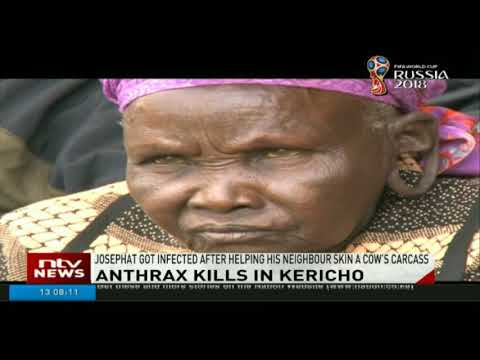 Man in Kericho dies of Anthrax infection after skinning a dead cow