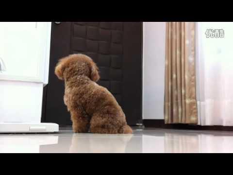 感人的對白!狗狗在家中等待主人回来的心情!