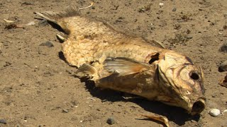 Calif. drought: No flushing, no showers