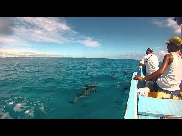Dolphins-greet-boat-in-fiji