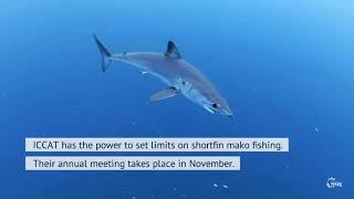 Campanha para proteção dos tubarões Mako
