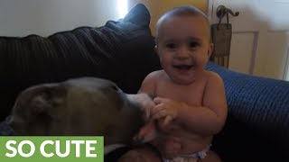 Pit Bull gives newborn baby a priceless laugh attack