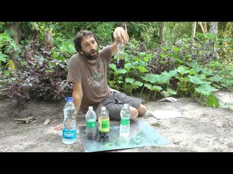 Les moyens nationaux aux microorganismes végétaux au levain