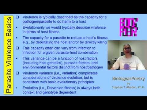 Die Viren intrazellular von den Parasiten