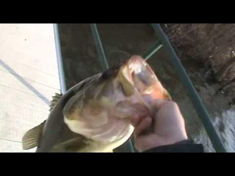 Early Spring Jerkbait Fishing – Monster 5LB Bass