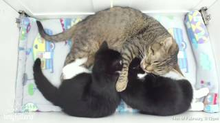 Milkbar and PURRS with Uncle Mirok!  TinyKittens.com