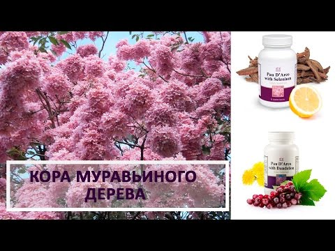 Лечение печени селезенки поджелудочной железы