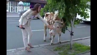 2015 05 27 Ленинский районный суд Курска. Ольга Ли и Святая Корова!!!