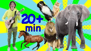 Study English Online for Kids | Animal Songs for Learning | Learn with Matt