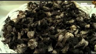 En materia de pescado - Tacos Gus, Mercado San Juan y Restaurante Merotoro