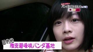藤岡みなみのパンダに会いたい!in四川省その2