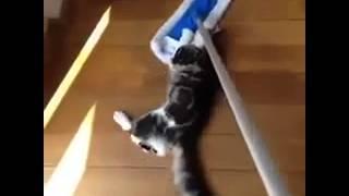 Умора! Коты и швабра.