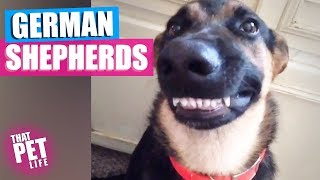 Goofy German Shepherds That Will Make You Smile