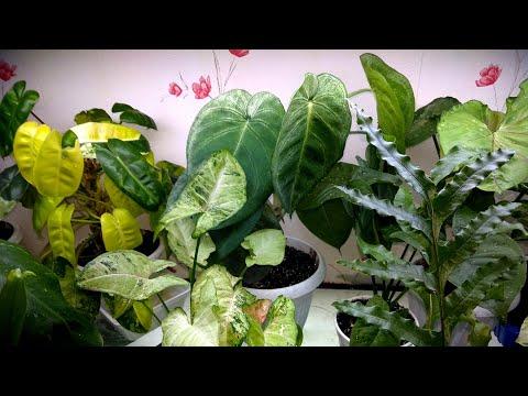 АНАПА Банный день №2 для разных растений.