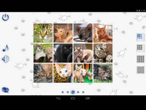 Video of Jigsaw Puzzles Cats