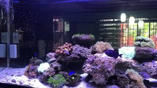 My 90 gallon mixed reef tank (Philippines)
