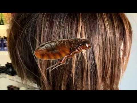 Pinwormok az intim területen