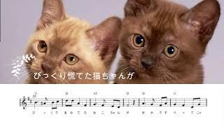 猫ちゃんとママ