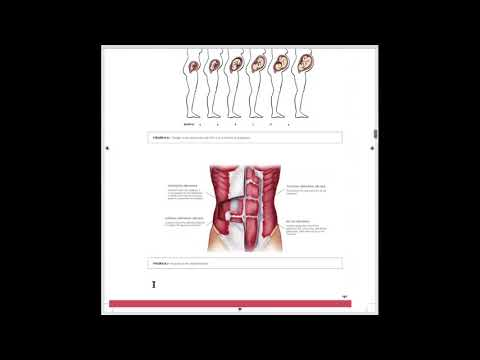 Pre- & Postnatal Coaching Certification: Anatomy and Physiology ...