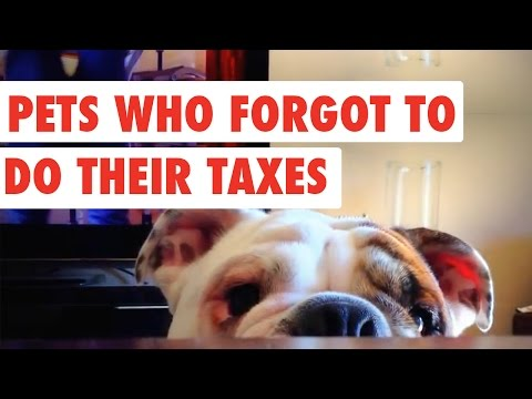 Pets Who Forgot to do Their Taxes   Funny Pet Video Compilation 2017