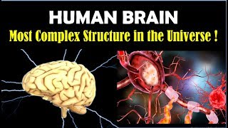 How Powerful is Your BRAIN - Incredible Facts about Human Brain