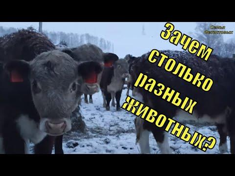 Зачем МНОГО разной ЖИВНОСТИ?/Семья Фетистовых
