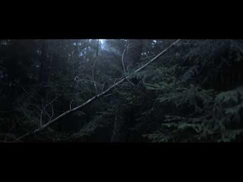 ביולומינסנציה ביער - תופעת טבע מרתקת
