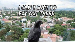 Training My Bird For Outdoor Free Flight | Vlog #273