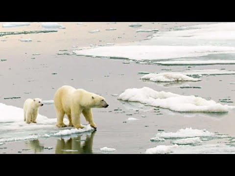 סקירת שינויי האקלים ומצב כדור הארץ בשנת 2020 והלאה