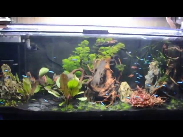 acquario in poche ore - sistema prodibio