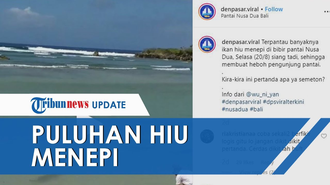 Viral Video Muncul Puluhan Ikan Hiu Menepi di Pantai Nusa Dua, Ini Penjelasan Kepala BPSPL