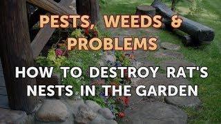 How to Destroy Rat's Nests in the Garden