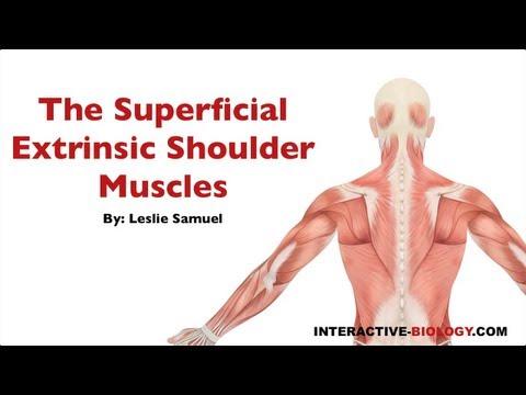 Les exercices aux douleurs des muscles du dos