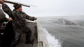 Охота на китов.Чукотка.