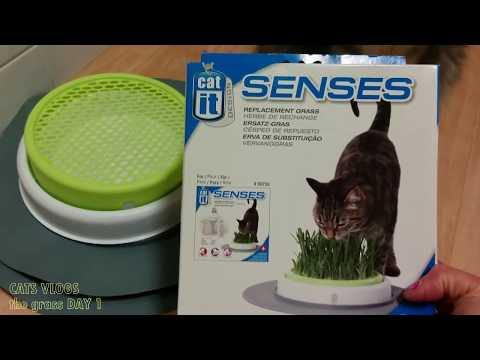 Video CATS VLOGS #1 GRASS FOR CAT | RUMPUT UNTUK KUCING