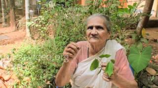 Herbal healer for Rheumatics - Vatham Kolli
