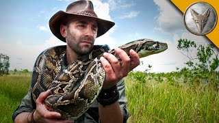 Giant Snake of the Everglades - The Invasive Burmese Python
