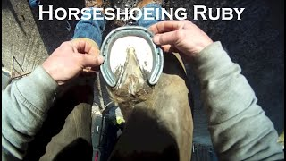 Horse Shoeing Ruby