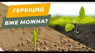 З якої фази можна вносити гербіциди на соняшник 🌻 і кукурудзу 🌽?