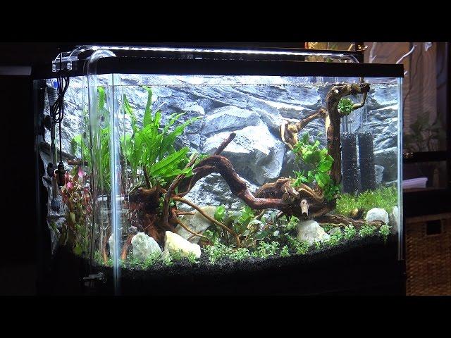 29 Gallon Freshwater Planted Aquarium Aquascaping & Setup (29G Aquascape Timelapse)