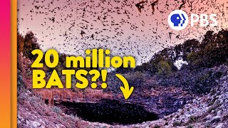 Bats: Guardians Of The Night