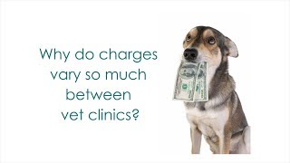 Why do prices vary so much between vet clinics?