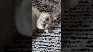 Bizim kedi