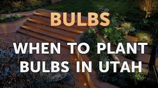 When to Plant Bulbs in Utah