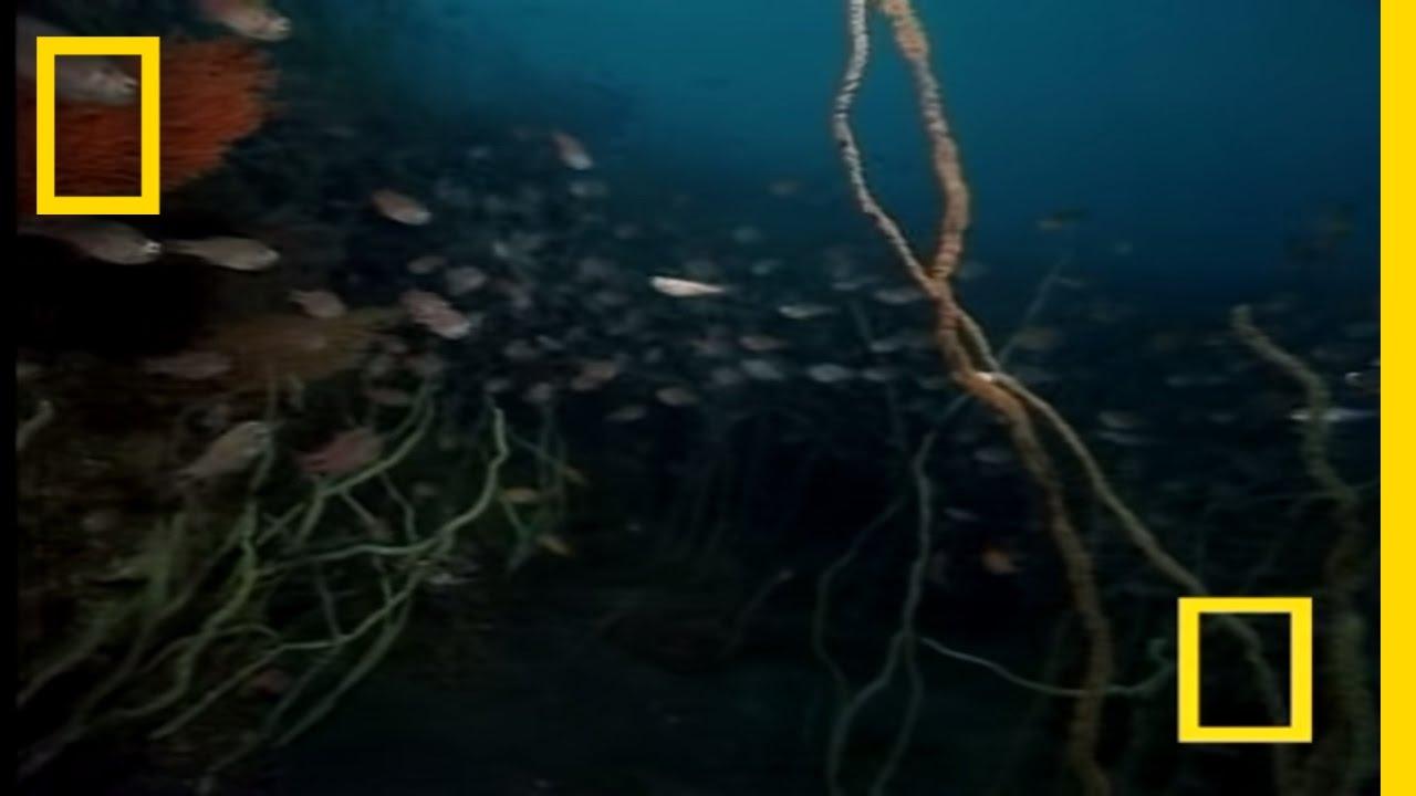 Strange Japanese Sea Creatures | National Geographic thumbnail