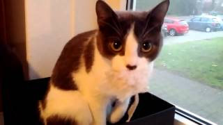 Funny cat reacts to camera  Кот играет на камеру