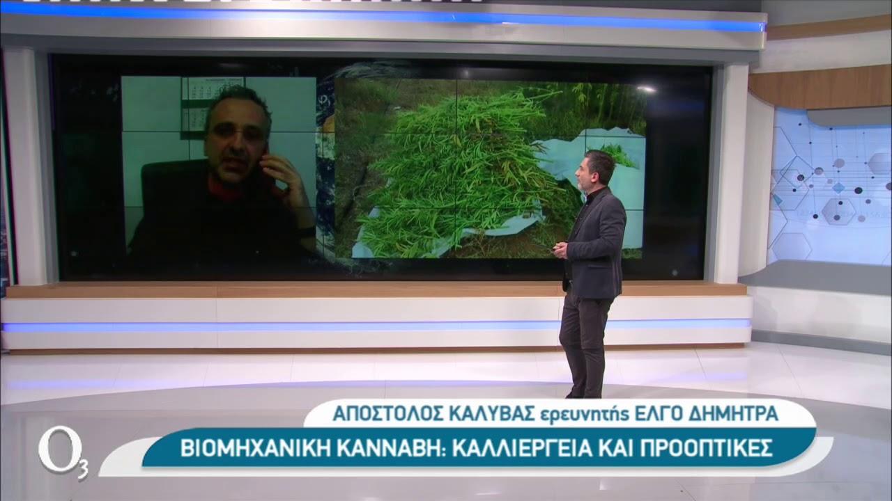 Η καλλιέργεια βιομηχανικής κάνναβης στην Ελλάδα | 22/01/2021 | ΕΡΤ