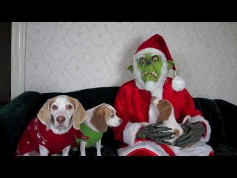 Image result for Maymo the christmas dog