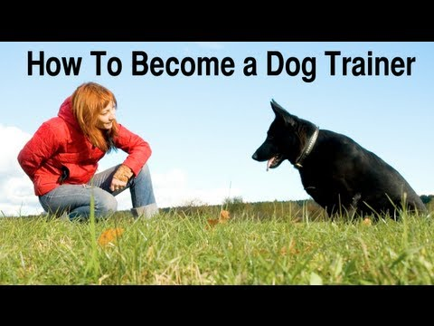 How To Become a Dog Trainer