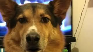 Baxter discusses Trumps visit to Korea